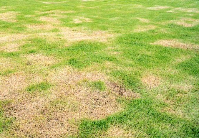 How do I keep my lawn alive in a drought