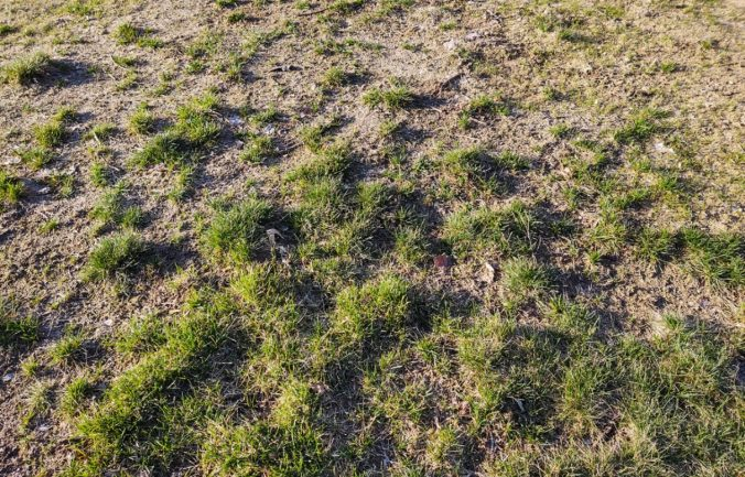 How do I repair my lawn and bring it back to life