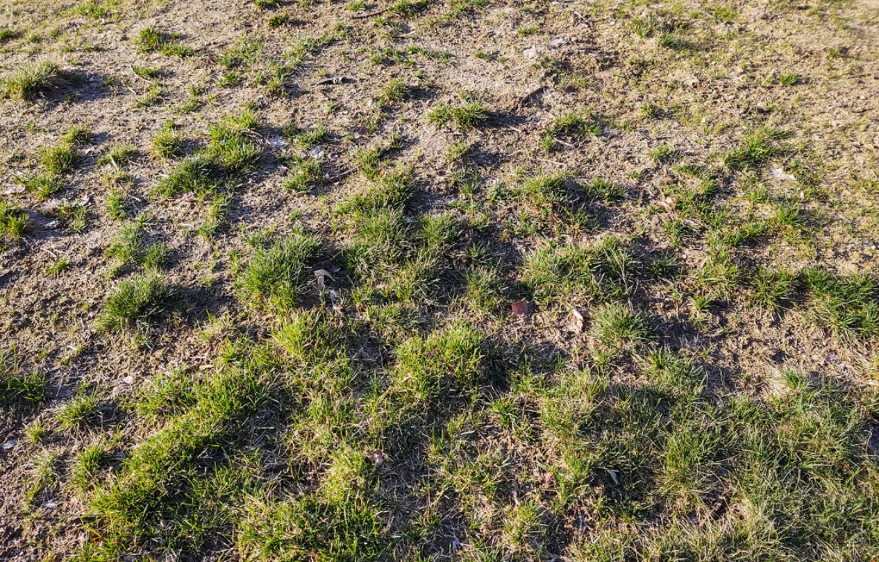 🥇How Do I Repair My Lawn And Bring It Back To Life?