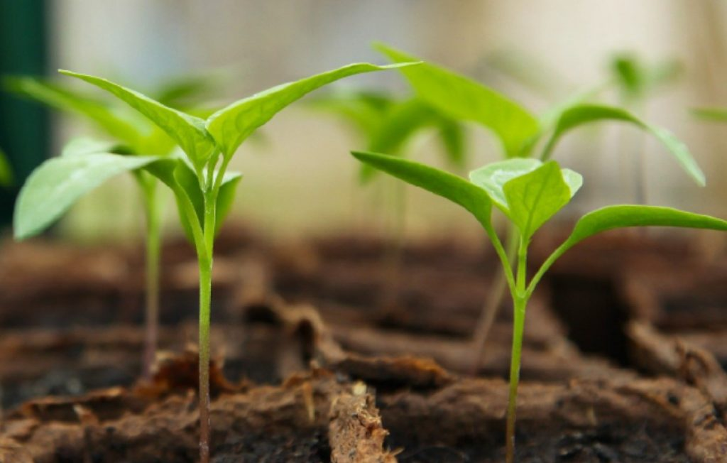 How to start seeds successfully indoors